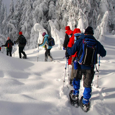 snowshoeing-trees-400